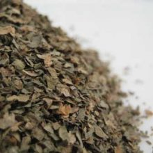 coriander leaf copyright d hugonin