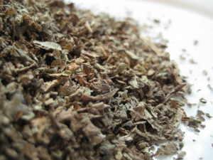 lobelia herb cut