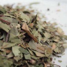 myrtle leaves cut - copyright d hugonin