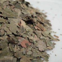 neem leaves cut copyright d hugonin