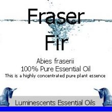 Fraser Fir Essential Oil Label copyright d hugonin