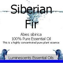 Siberian Fir Essential Oil Label copyright d hugonin