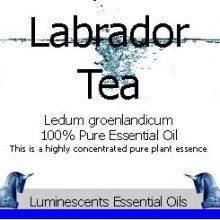 labrador-tea-essential-oil-label