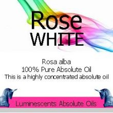 white-rose-absolute-label