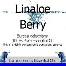 Linaloe Berry Essential Oil
