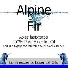Alpine Fir Essential Oil Label copyright d hugonin
