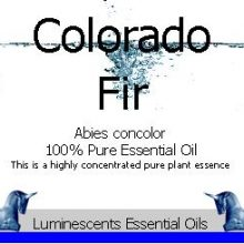 Colorado Fir Essential Oil copyright d hugonin