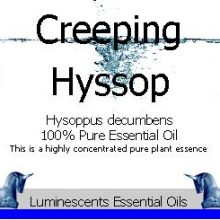 Creeping Hyssop Essential Oil