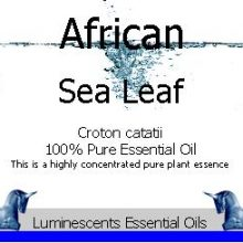 African Sea Leaf Essential Oil label