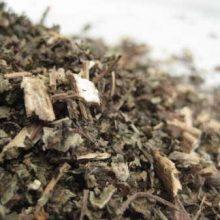 motherwort herb cut copyright d hugonin