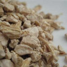 panax ginseng root copyright d hugonin