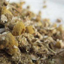 german chamomile copyright d hugonin