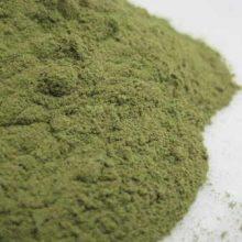Moringa powder copyright d hugonin