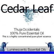 Cedar Leaf