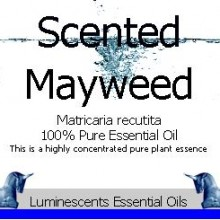 Scented Mayweed essential oil label