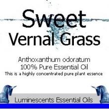sweet vernal grass