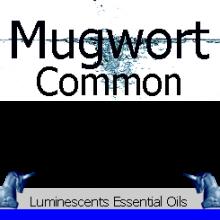 common-mugwort-essential-oil