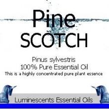 scotch pine essential oil label