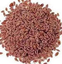 psyllium-seeds-whole
