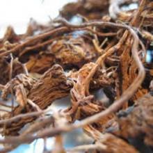 coleus root