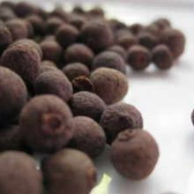 allspice-berries-copyright-d-hugonin