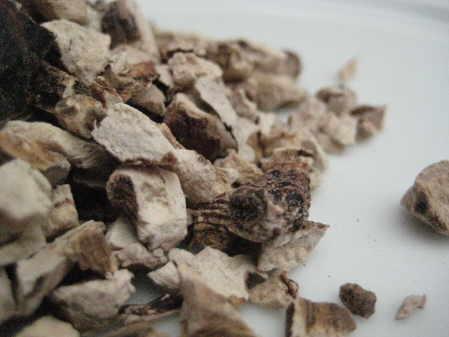 Calamus Root Cut copyright d hugonin