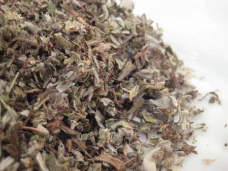 mouse ear herb copyright d hugonin