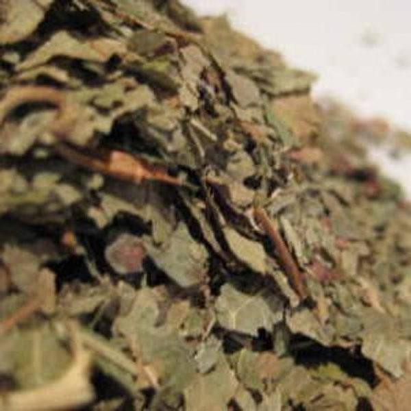 blackcurrant leaf cut