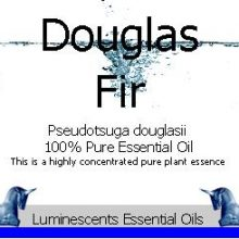 Douglas Fir Essential Oil Label copyright d hugonin