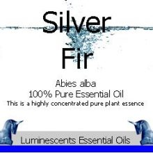 Silver Fir Essential Oil Label coyright d hugonin