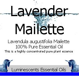 Lavender Mailette Essential Oil