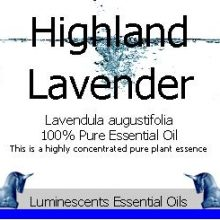 highland lavender essential oil