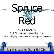 red spruce essential oil
