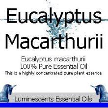 eucalyptus macarthurii label