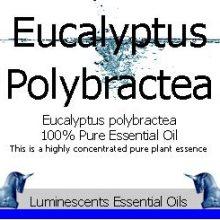 eucalyptus polybractea label