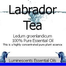 labrador-tea-essential-oil-label