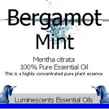 bergamot-mint-essential-oil