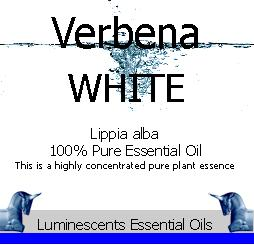 white-verbena-essential-oil