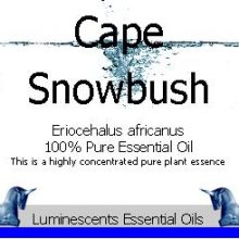 capesnowbush-essential-oil
