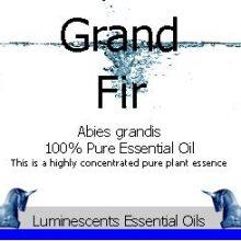 Grand Fir Essential Oil Label copyright D hugonin