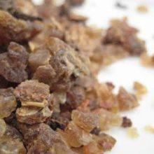Myrrh Gum coyright d hugonin