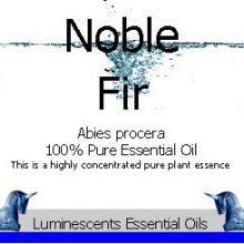 Noble Fir Essential Oil Label copyright d hugonin
