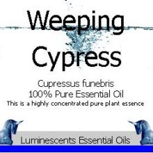 Weeping Cypress Essential Oil Label copyright d hugonin