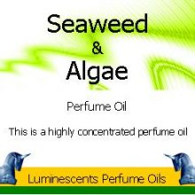 Seaweed and algae perfume oil copyright d hugonin