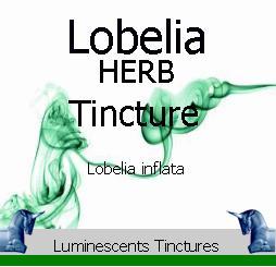 Lobelia herb tincture copyright d hugonin