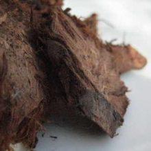 Dryopteris crassirhizoma Guan Zhong copyright d hugonin