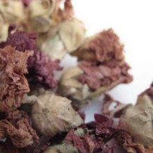 confederate rose hibiscus mutabilis copyright d hugonin
