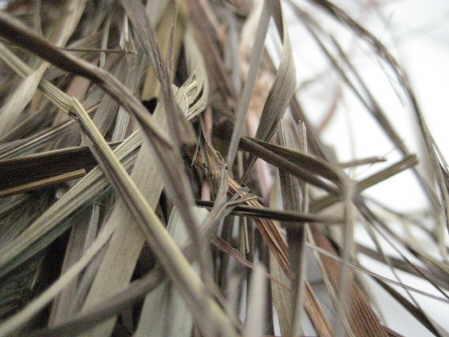 sweetgrass copyright d hugonin
