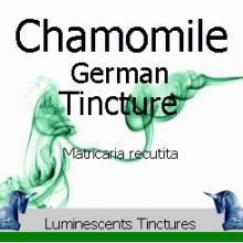 German Chamomile Tincture