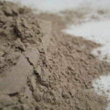 black cohosh powder copyright d hu